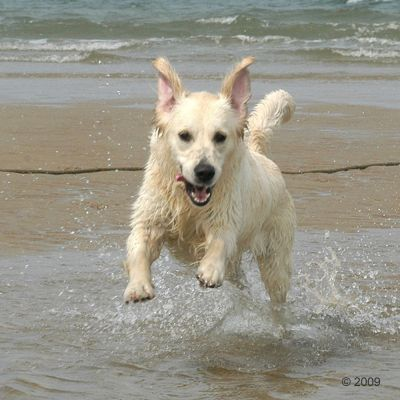 Acana Pacifica Dog
