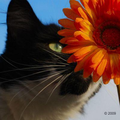 Acana Regionals Pacifica Cat