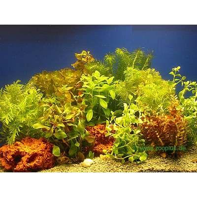 Aquariaplanten Bundel Planten-Assortiment