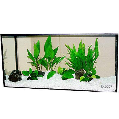 Aquariumplanten Zooplants Baarsbekken