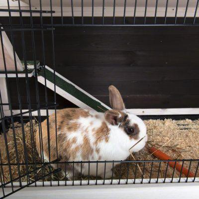 lounge cage pour lapin et cochon d 39 inde 2 niveaux. Black Bedroom Furniture Sets. Home Design Ideas