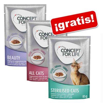 Concept for Life pack mixto de prueba 3 x 85 g