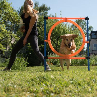 Fun & Sport Dog Agility Jumping Hoop