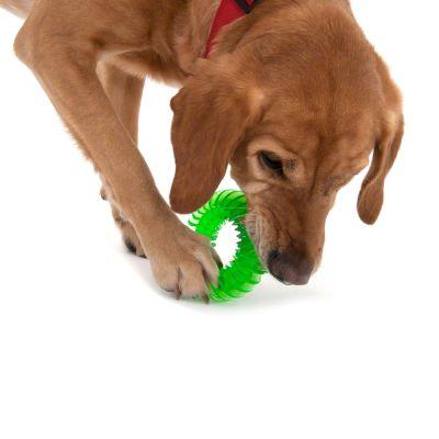 Gioco per cani Anello in gomma per l'igiene orale