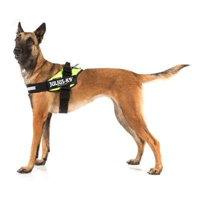 Harnais Julius-K9 IDC® Power, vert fluo pour chien