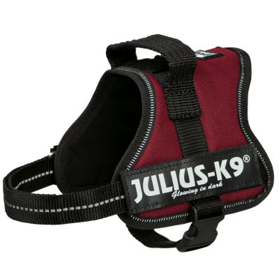 Harnais Julius-K9 Power, bordeaux pour chien