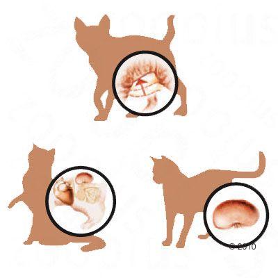 Hill's Feline Sterilised Cat Mature Adult