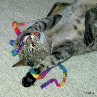 Katzenangel Cat Charmer