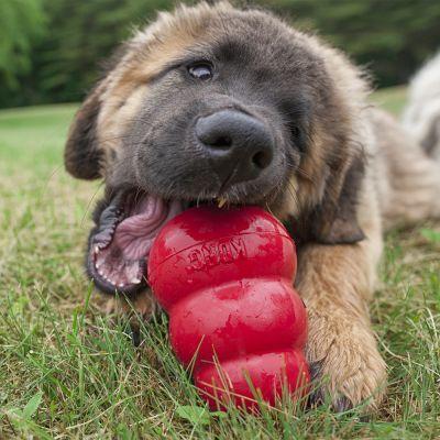 Dog Kongs For Sale