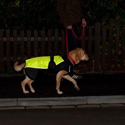 Mantella per cani Illume Nite Neon