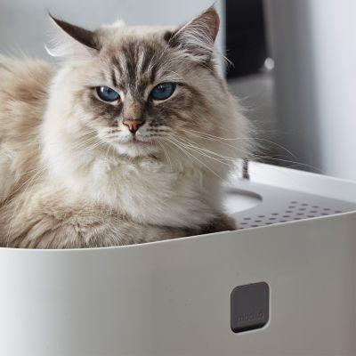 Modko Modkat -kissanvessa