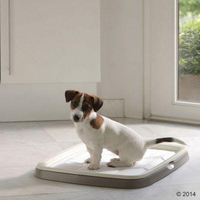 Puppy Trainer Starter Set Savic