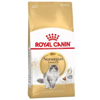 Royal Canin Norwegische Waldkatze Adult
