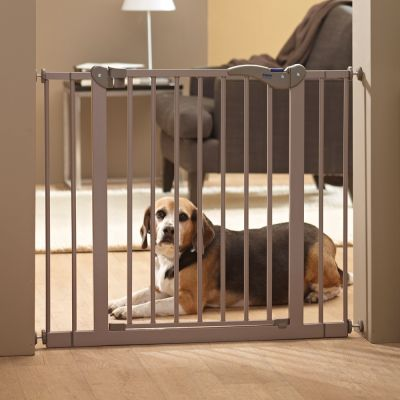 Saving Dog Barrier 2