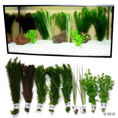 Set di piante per acquario zooplants 39 goldfish 39 zooplus for Piante acquario