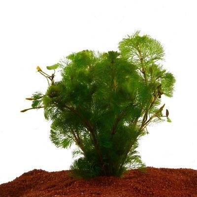 Set piante per acquario Zooplants
