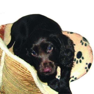 SnuggleSafe termovankúšik pre domáce zvieratá