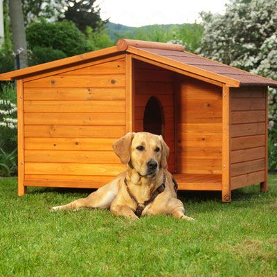 Spike Special Dog Kennel