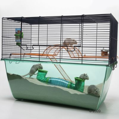 Starter Set For Small Pets