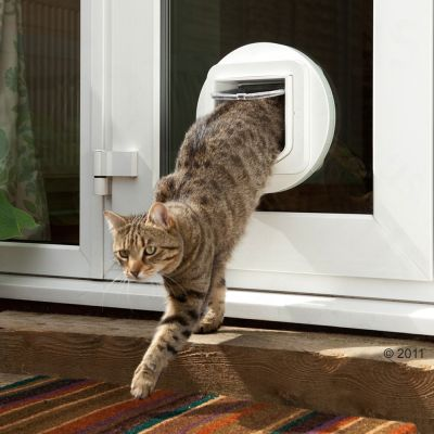 cat stands in litter box but pees outside