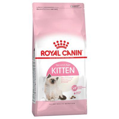 4-teiliges Kitten Starterpaket