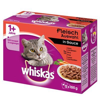 Cat Wont Eat Warm Food