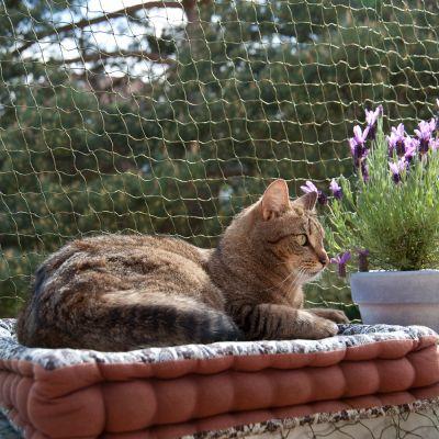 Wzmocniona siatka ochronna dla kota, oliwkowa