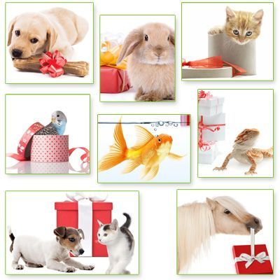 zooplus Gift Certificate